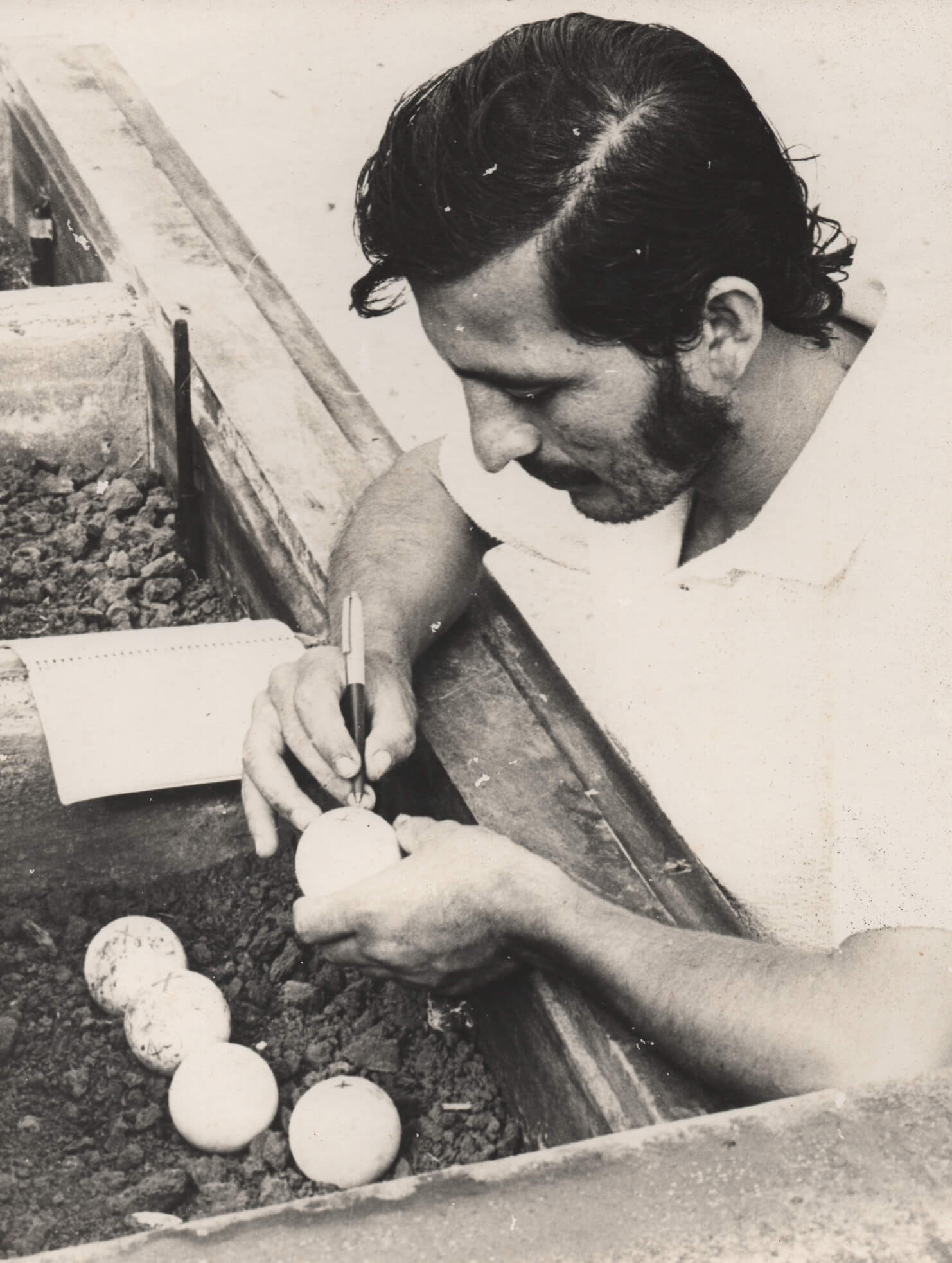 Galapagos National Park official, Peppe Villa marking giant tortoise eggs in 1974