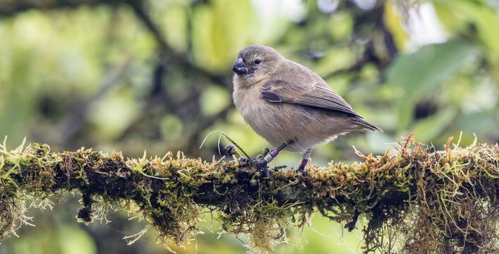 Galapagos Visitors Can Now Help CDF Ornithologists Protect Birds