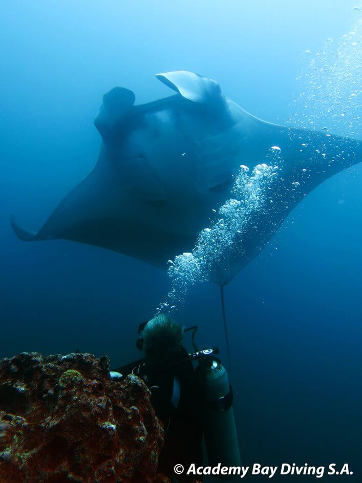 Diver with Manta Ray.