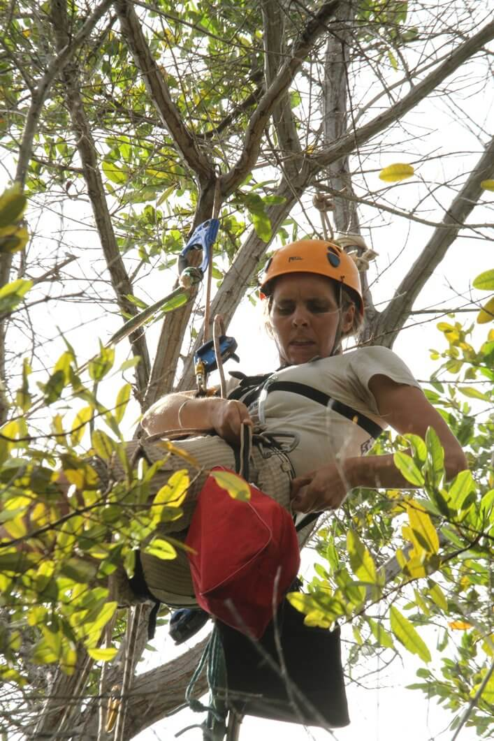 Mangrove Finch Project leader Francesca Cunninghame ready to get nests from high in the canopy at Playa Tortuga Negra.