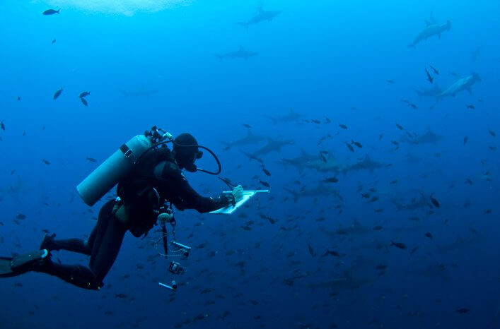 CDRS Marine Scientists conducting shark census using stereo-video surveys.