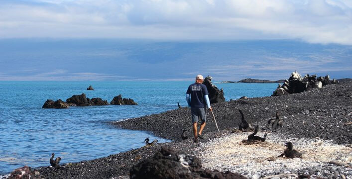 Monitoring Penguins and Cormorants in the West of the Galapagos