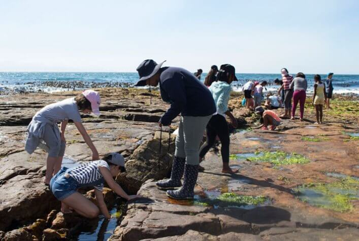 Marine Explorers performing coastal cleaning and rocky shore exploration at False Bay, Cape Town.