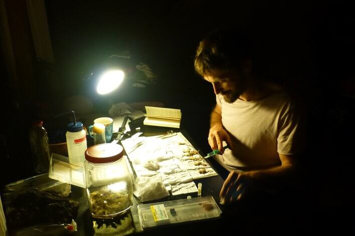 Dr. Raffael Ernst (FCD) preserving frog specimens collected in different areas of the agricultural area