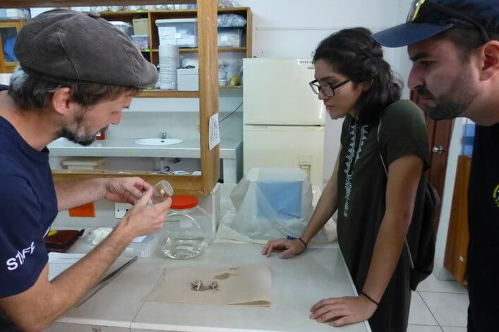 Dr. Raffael Ernst (FCD, left) explaining the process of preparing frogs to Maria del Mar and Dr. Rafael Bermúdez (ESPOL)