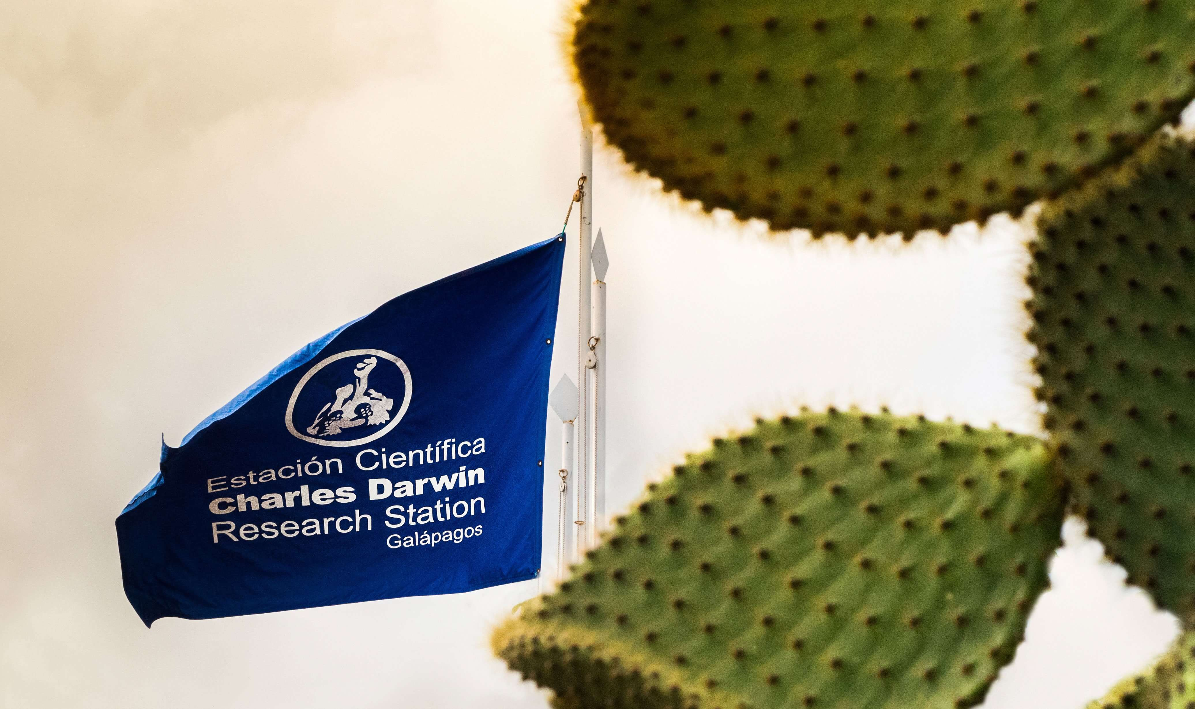 The Charles Darwin Research Station flag on Santa Cruz Island.