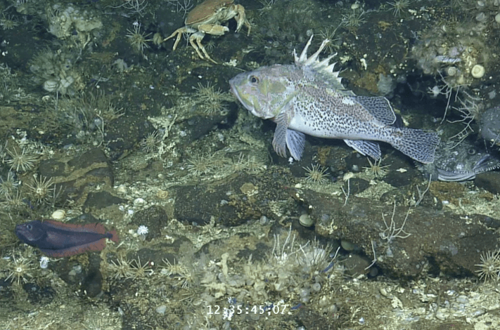 Solving a Question of Sustainability by Studying the Ear Bones of Galapagos Fish