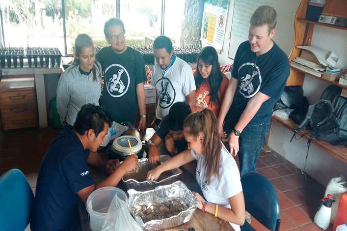 Separating organisms present in the soil with the support of national and international volunteers and field assistants of the Galapagos Verde 2050 Project.