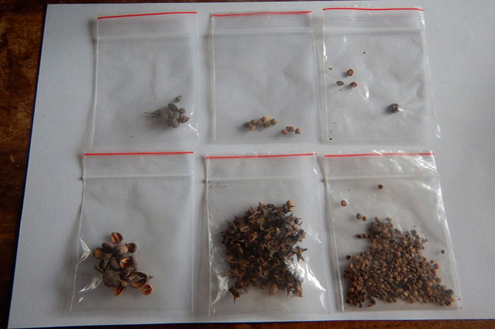 Seeds found in soil samples.
