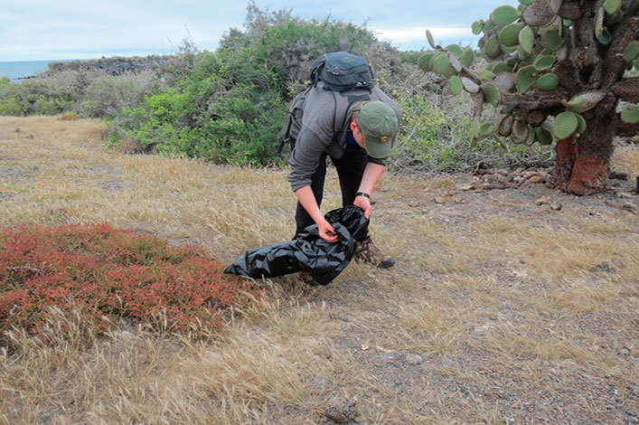Collecting land iguana excrement.