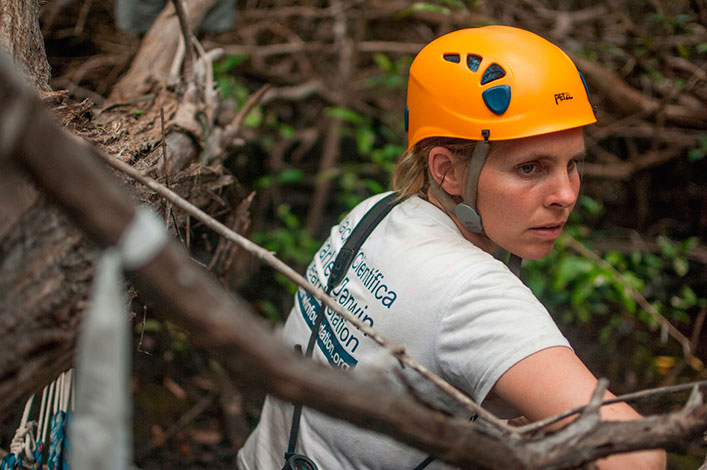 Francesca Cunninghame gets ready to collect a Mangrove Finch nest on Isabela Island.