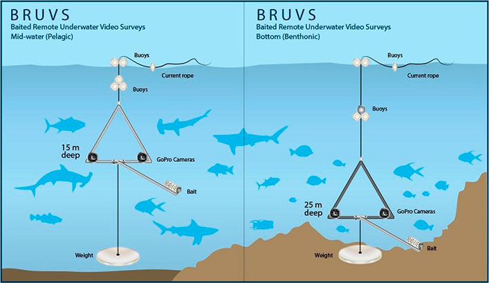 Schematic representation of the differences between pelagic and benthic BRUVs.