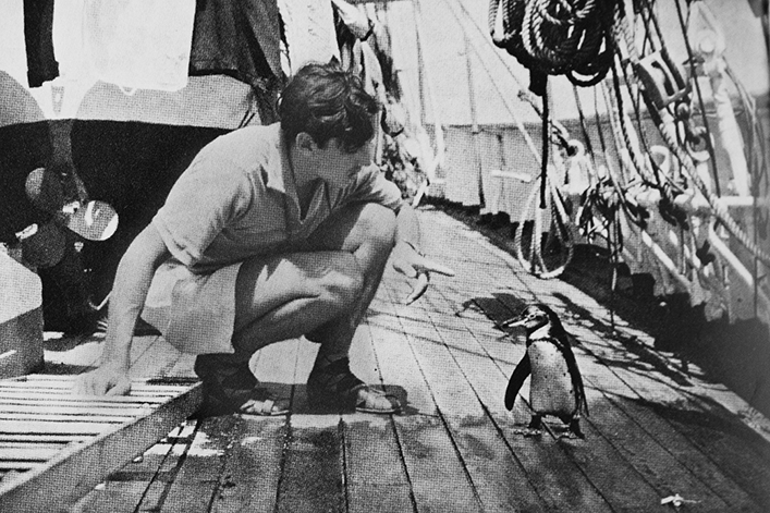 The Xarifa's doctor looking at a Galapagos penguin.