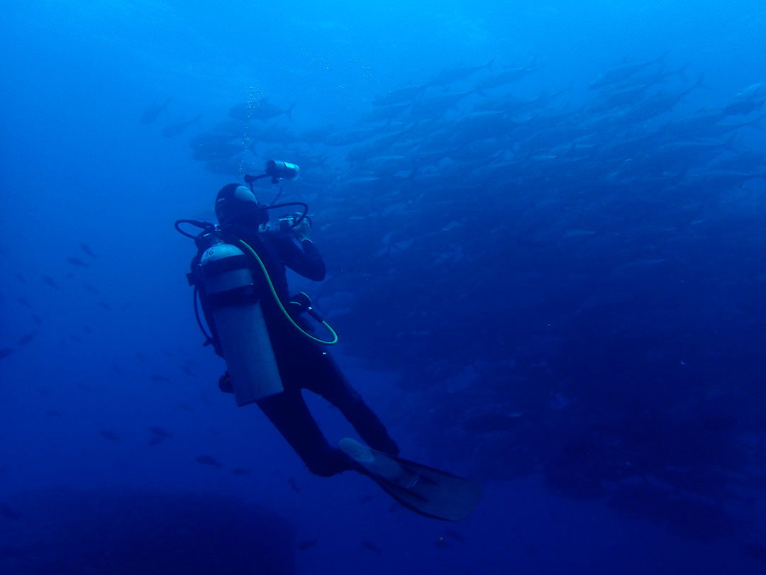We explored the underwater paradise of Galapagos with Ecoventura.