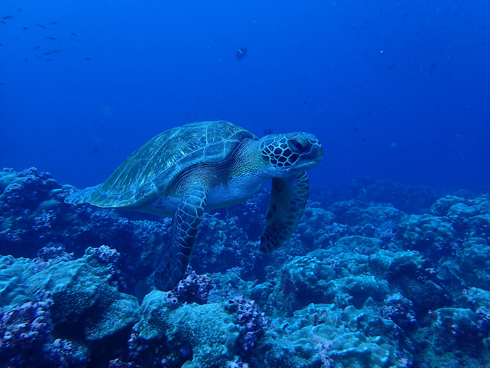 The sighting of a marine turtle.