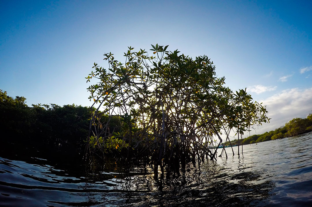 Between Boom and Bust Cycles: How Much are Galapagos Mangroves Worth?