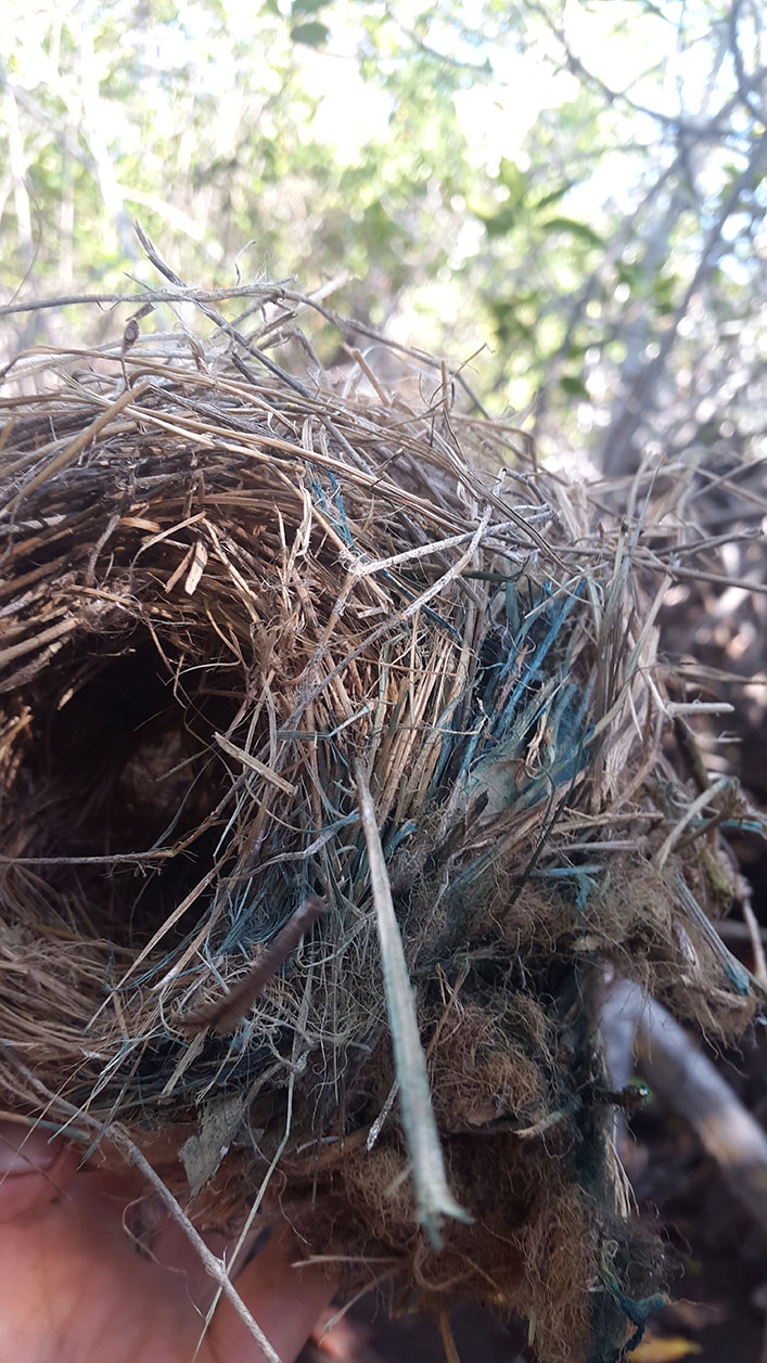 The blue part of the nest indicates where permethrin has been added.