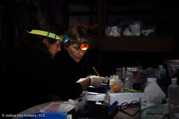 Drs. Sharon Deem and Ainoa Nieto processing blood samples at night