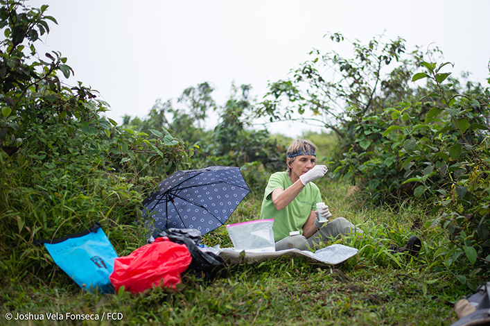 Dr. Sharon Deem processing samples in the field.