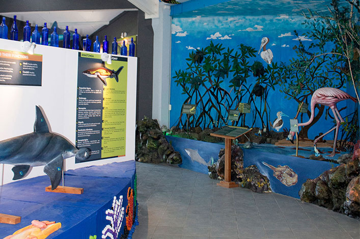 In the left side, sharks' anatomy and senses section and in the right, mangroves  as a nursery area for juvenile sharks.