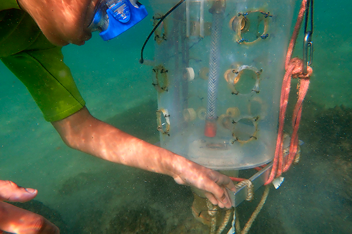 Shark Ambassador placing a light trap to collect fish larvae in the mangroves during the fisheries  practice at the Charles Darwin Research Station