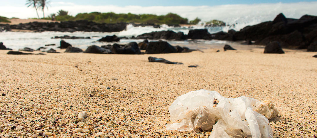 "Plastic found at ""La Ratonera"" beach close to the Charles Darwin Research Station."