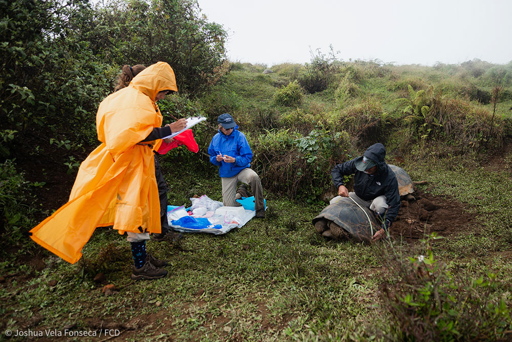 The team collecting tortoise #1 samples