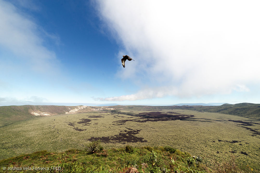 A Galapagos Hawk flying through while I was making a timelapse