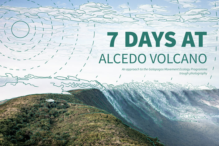 Seven days at Alcedo Volcano