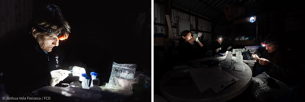 Sharon Deem on the left photo and on the right: Ainoa Nieto, Sharon Deem, and Surya Castillo (from left to right) performing analysis using only flashlights as light sources
