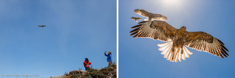 Surya Castillo (left) and Sharon Deem (right) enjoy the flight of a Galapagos Hawk.