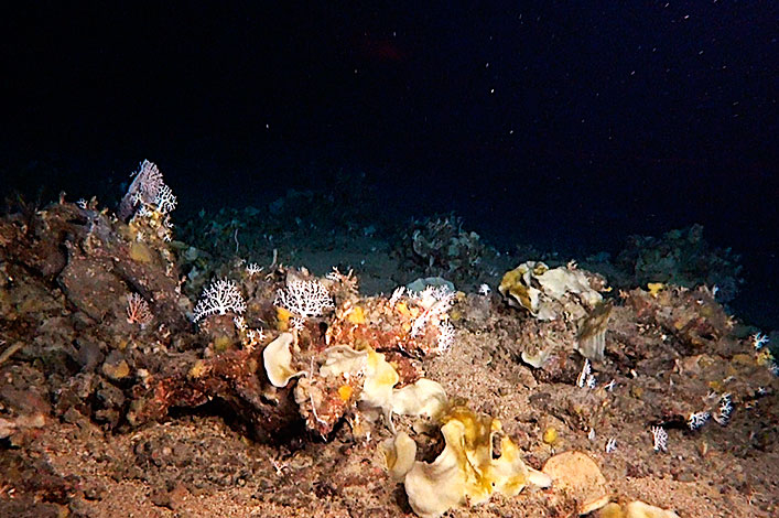 Deep sea sponge and coral garden found at around 180m depth.