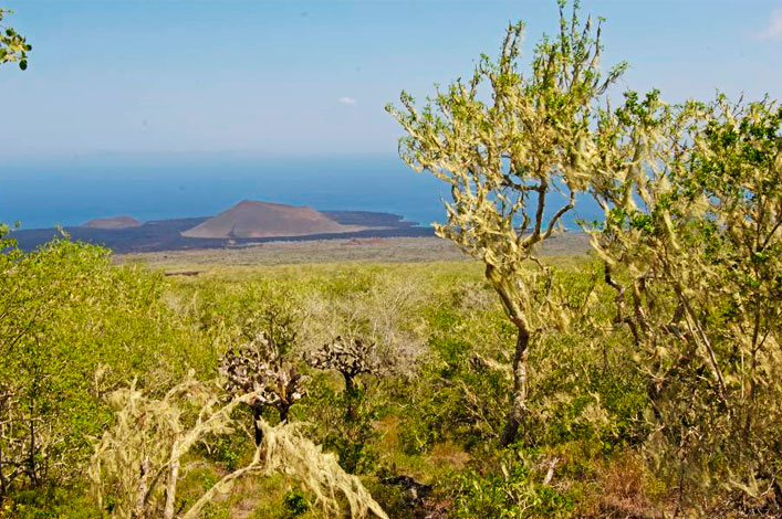 4 new species of lichen discovered in Galapagos