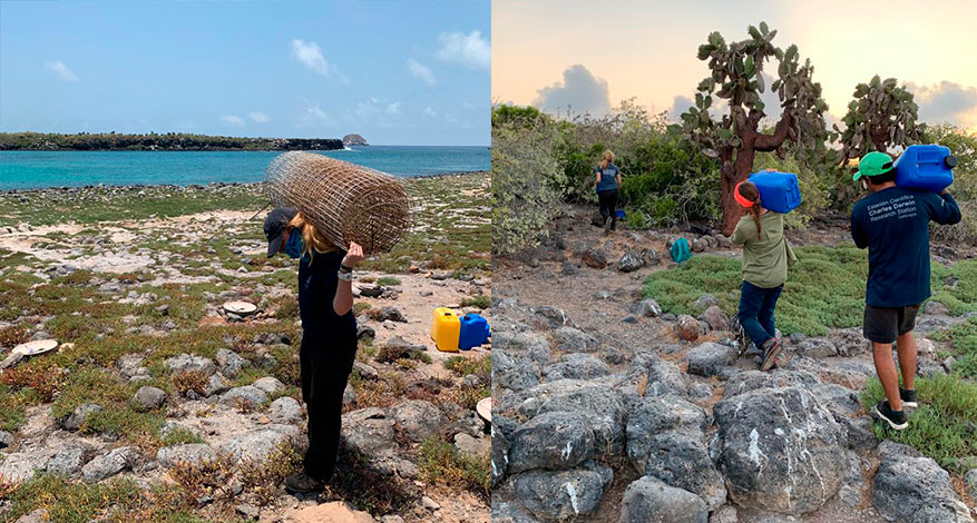 Esme Plunkett carrying the old fencing from the study sites (left). Felipe Cornejo, María Guerrero, Paúl Mayorga (GV2050 team) carrying 20 litre chimbuzos to the GV2050 study sites (right)