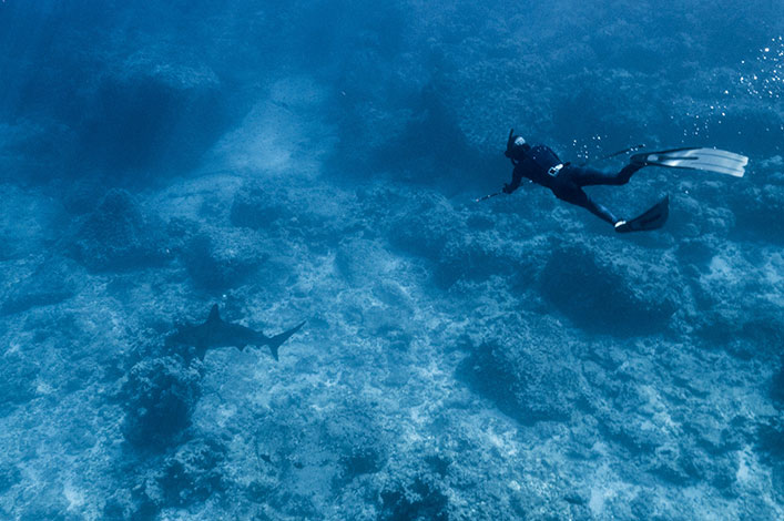 Freediving with the Hawaiian sling to obtain shark skin samples