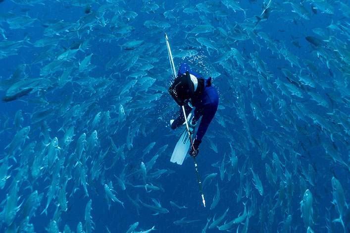 Freediving between a school of Bigeye jack (Caranx sexfasciatus) and the Hawaiian sling