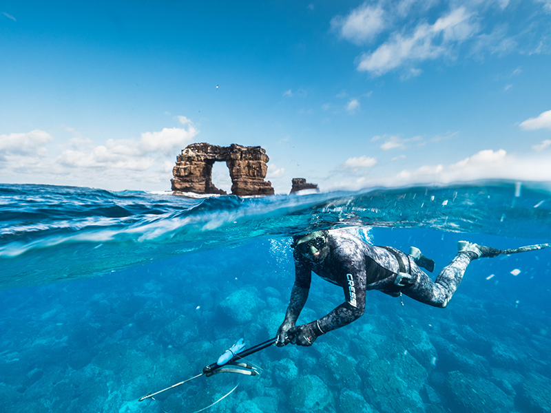 CDFs shark project Principal Investigator Dr Pelayo Salinas de Leon, freedives to deploy satellite tags on pregnant hammerhead sharks at Darwins Arch in northern Galapagos
