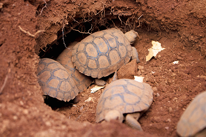 Vote on the name for our Newborn Tortoise