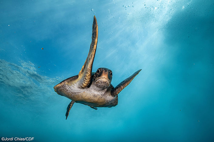 Exploring the life of Sea Turtles in the Galapagos Marine Reserve