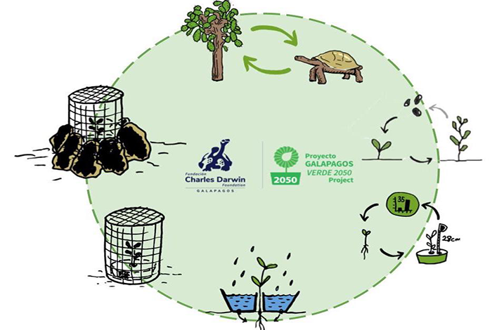 Preserving terrestrial ecosystems of the Galapagos islands