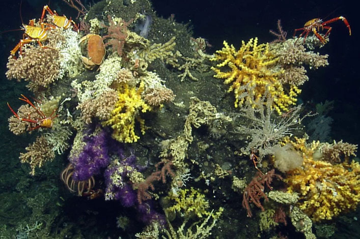 The World that Darwin never saw: 30 new deep-sea invertebrates discovered within the Galapagos Marine Reserve