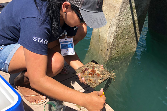 """Will it be or not?"", Identifying marine invertebrates for Galapagos Conservation"
