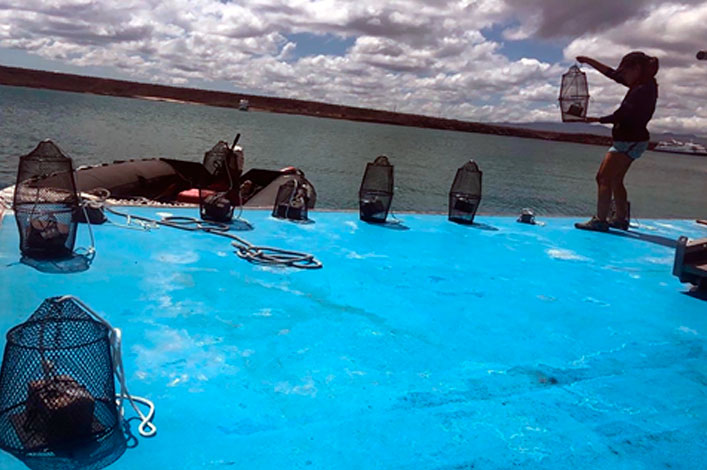 Silent invaders in the Galapagos Marine Reserve! A story of how we study them, through the COVID-19 pandemic…