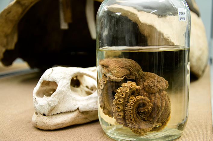 Galapagos Natural History Collections: a scientific and educational tool