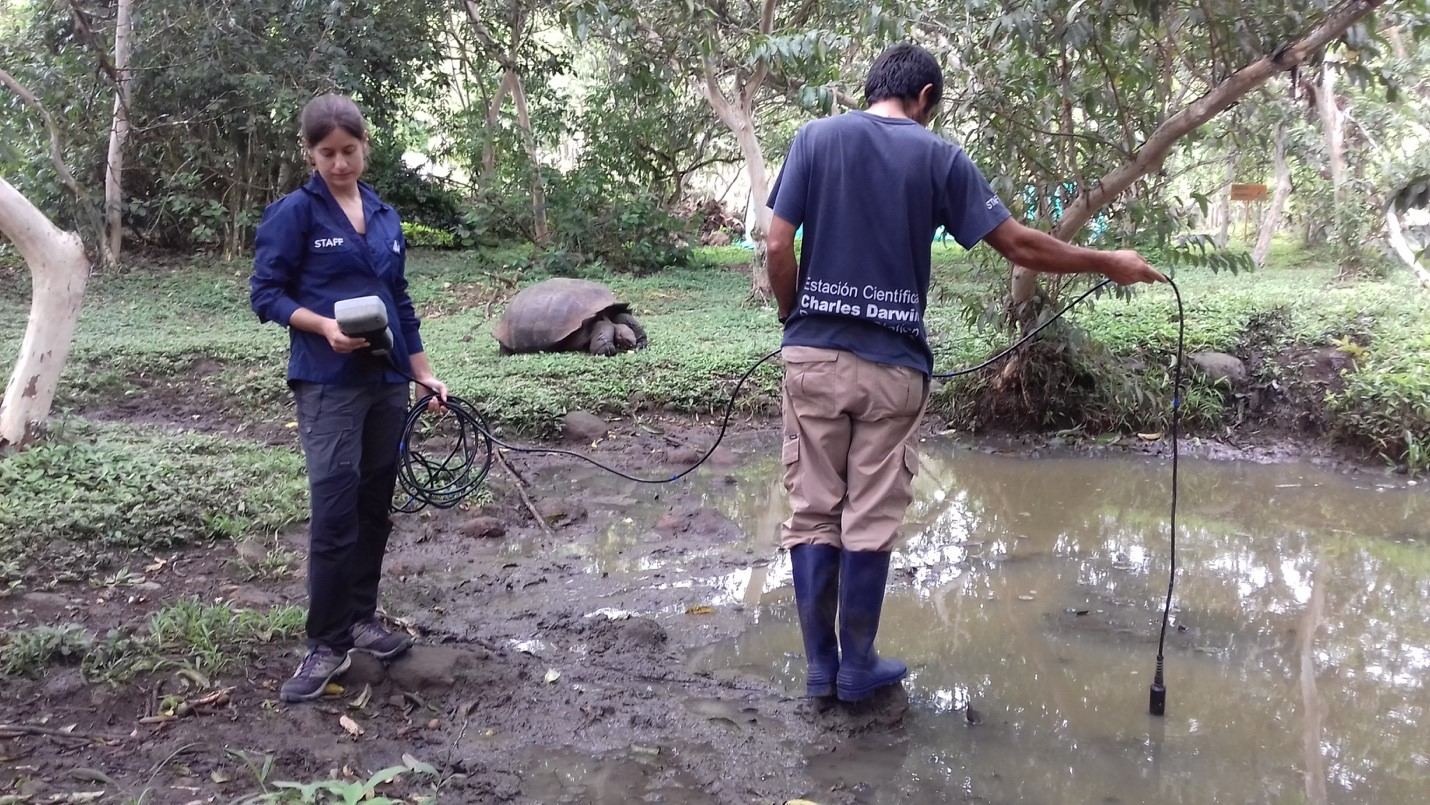 Freddy Cabrera dropping a water quality probe into a pond while Ainoa Nieto Claudín examines temperature and dissolved oxygen values. An adult tortoise is seen consuming invasive guava fruits next to a guava tree on its right side.