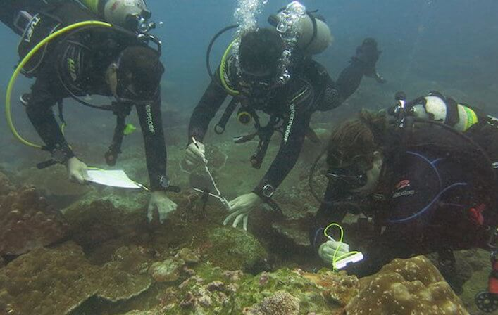 Investigation about Subtidal Monitoring of Non-native Species Begins in the Cocos Island National Park