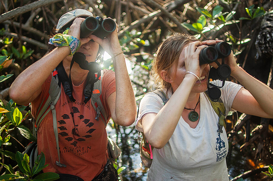 Team of the Mangrove Finch project in the field looking for nests.