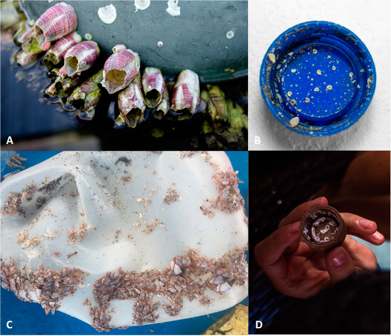 We also found out that roughly 25% of all plastic debris found at beaches in Galapagos is colonized by at least one animal or plant (Keith et al., 2019).