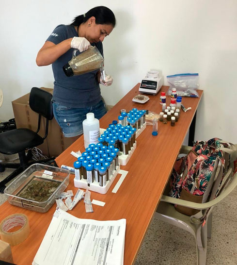 Rosita Calderón preparing representative samples from each plate for further DNA metabarcoding analysis. Photo by Inti Keith.
