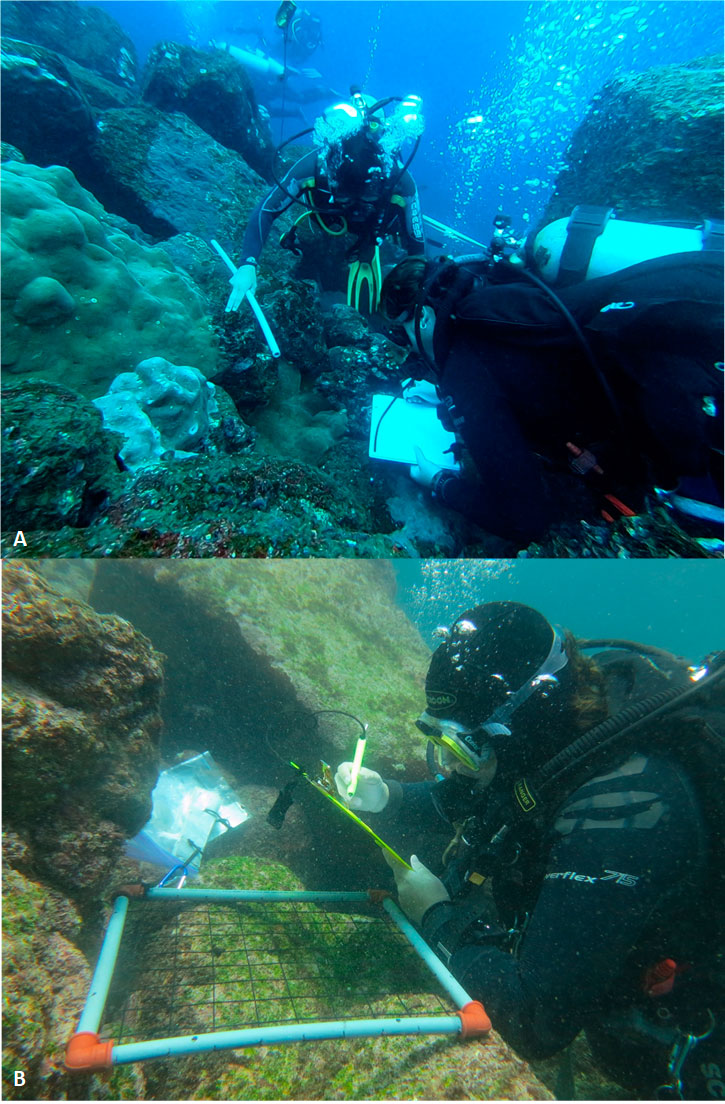 A: Wilson Íñiguez (left) and Inti Keith (right) carrying out the annual Subtidal Ecological Monitoring. B: Inti Keith surveying sessile organisms using a quadrat as part of the monitoring process. Photos by Sofía Green and Macarena Parra.